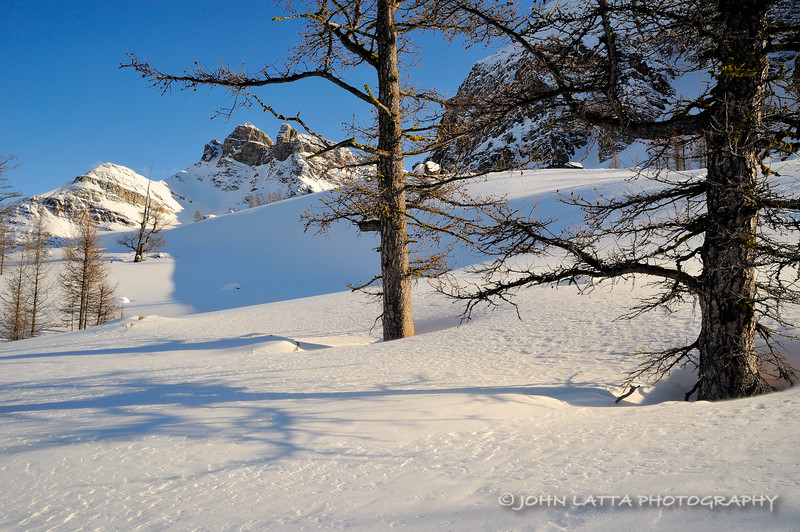Larch Shadows on Snow