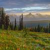 Last Light on Meadow