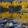 Alpine Larch Reflected in Rocky Tarn