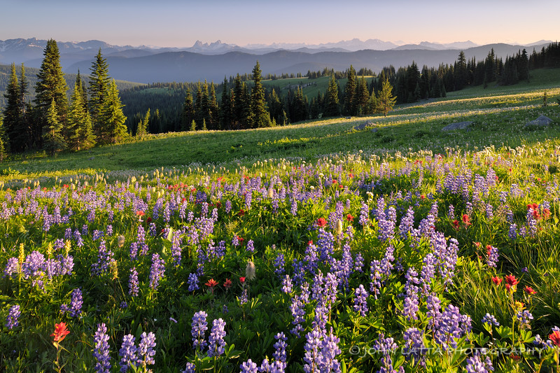 Heather Ridge Meadow