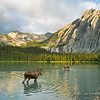 Moose Cow and Calf, Lower Elk Lake