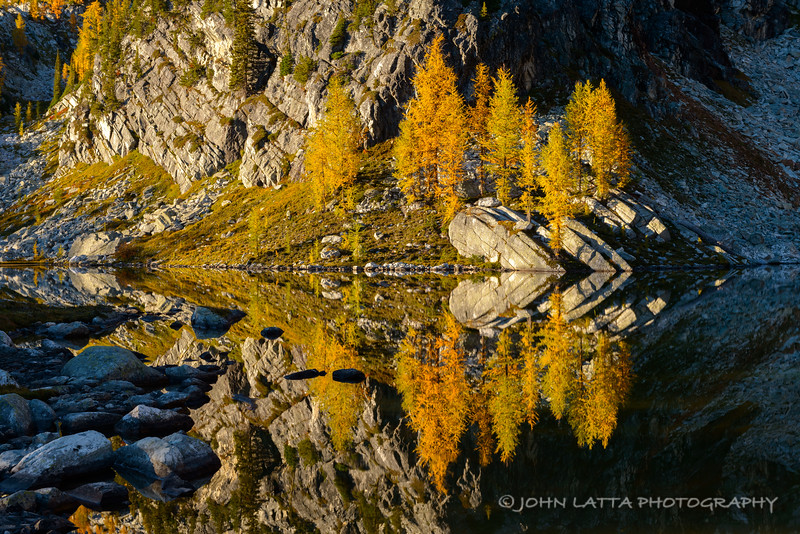 Lyell's Larch Reflection