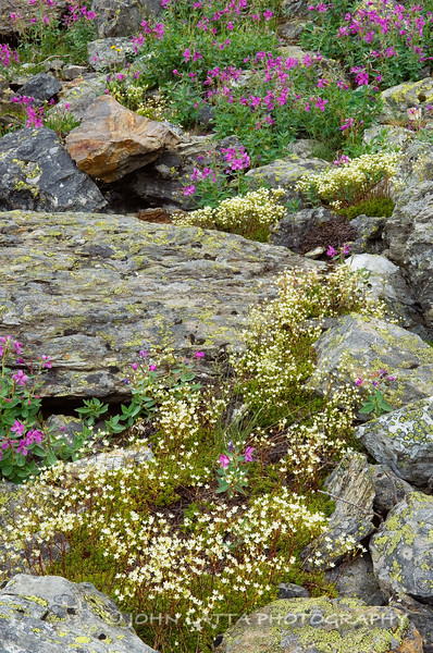 Talus Flower Garden