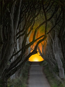 Harold Hall Dark Hedges AA19 O