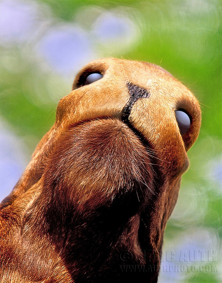 Moose snout, from below