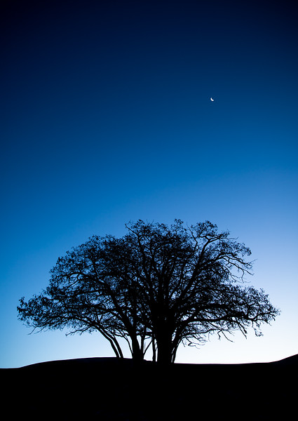 Day 416 | The Cartwright Tree