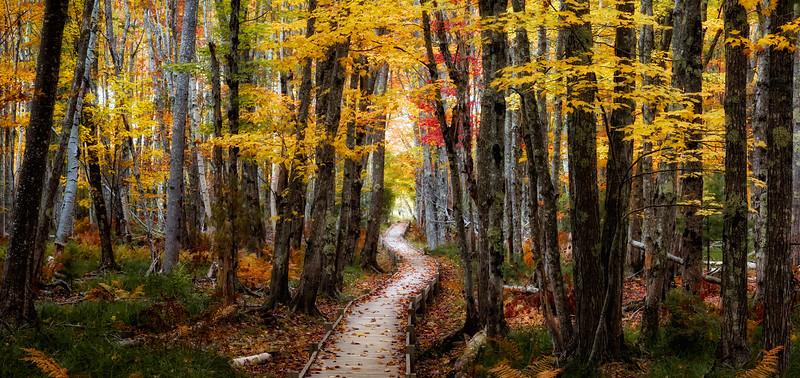 135 Dan Mottaz 2 Trail of a Whisper 7311