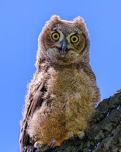 whoo staring at you