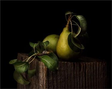 126 Heidi Egerman 1 Pear-Harvest