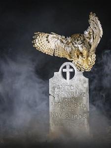 006 Harold Hall 1 Toumbstone Owl AS