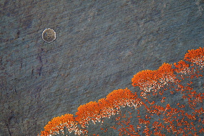 Greg Stirngham Autumn Moonrise - December 2019 Print Night