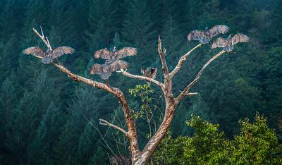 120 Dave Fujii 1 Tree Transplanting 97410