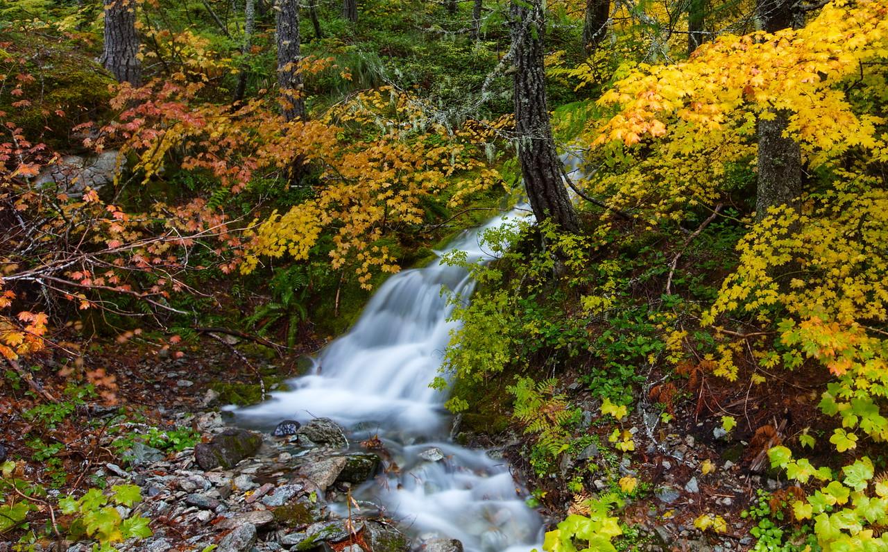 Greg Stringham 2 Fall Colors on Rainier