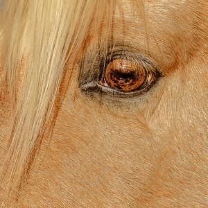 Michelle Tullis 2 golden eye AS