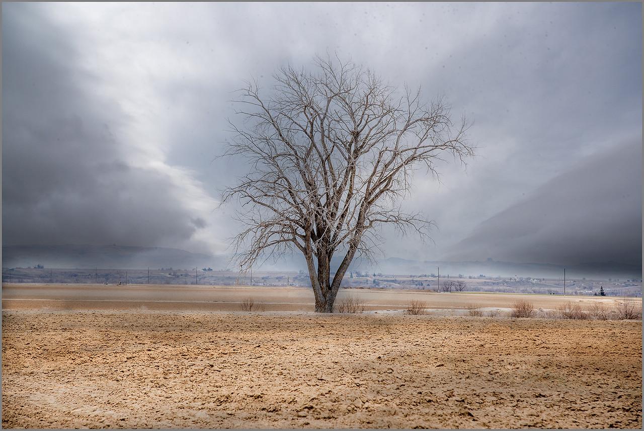 Paul-Bradley 2 Cloudy-Tree