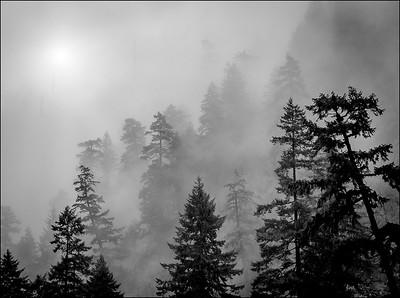 Rick Ohnsman 1 Fog in the Gorge AS