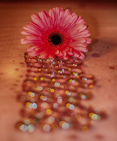 Mary Martindale 1 Pink Daisy Bokeh AS