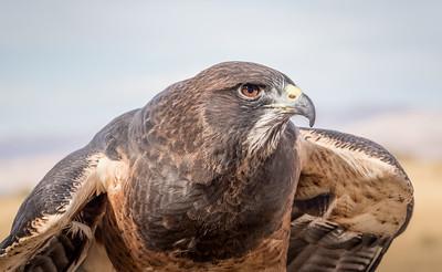 112 Dave Fujii 1 Angry Bird 83709