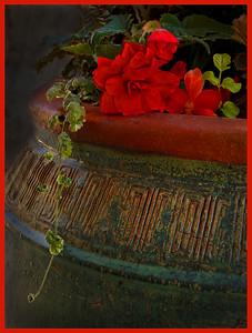 111 Scott Carter 1 Helen's Flower Pot