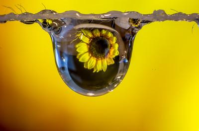 112 Rick Ohnsman 1 Sunflower Dewdrop