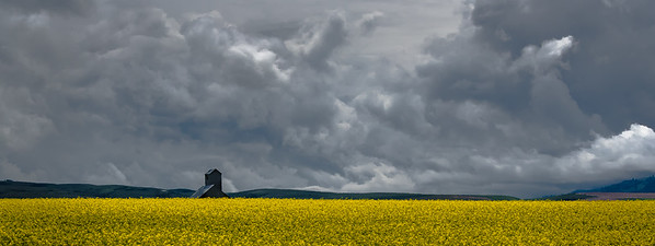 105 Jeff Armstrong 1 Canola field