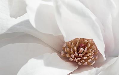 130 Ruthann Greene 2 Magnolia
