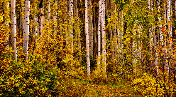 020 Sharp Todd 2 Colorado Aspens  2 AS