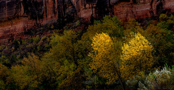 004 Derek Ford 1 Canyon Trees AS