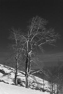 008 Lynn Nunn 2 treein snow as