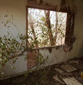 117 Mark Murray 2  tree house