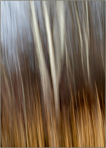 127 Joyce Burzloff 2 The Forest
