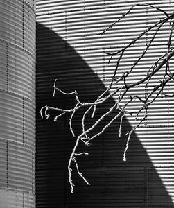 120 Harold Hall 1 Galvanized Twigs