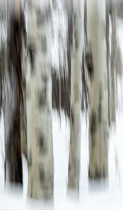 128 Derek Ford 2 Winter Blur