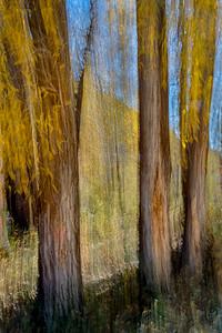 Derek Ford 2 Blur of Autumn