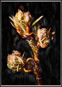 007 Martin Torres 1 Vintage Blossoms AS