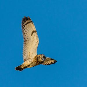 108 Ken Miracle 1 Owl Scan