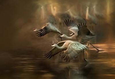 Muriel McClellan 2  Sandhill Cranes in Idaho