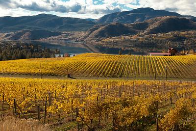 Fall Vineyards in Okanagan Falls.