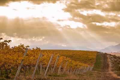 Osoyoos vineyards.
