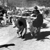 Blue Hill Fair Oxen Circa 1990.jpg