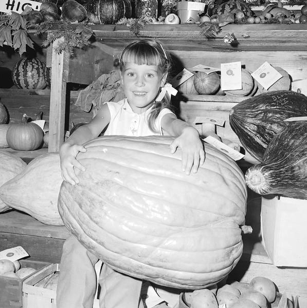 bluehill_pumpkin.jpg