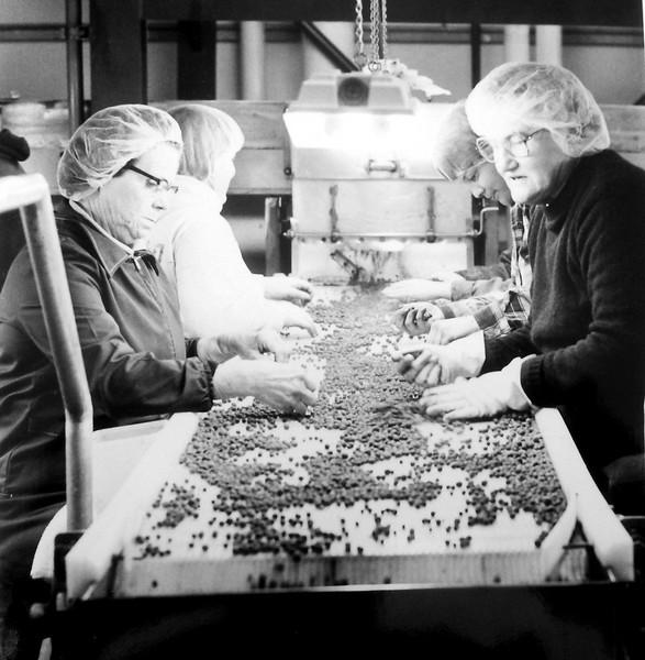 blueberry ladies conveyor .jpg