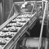 Potatoharvest 9
