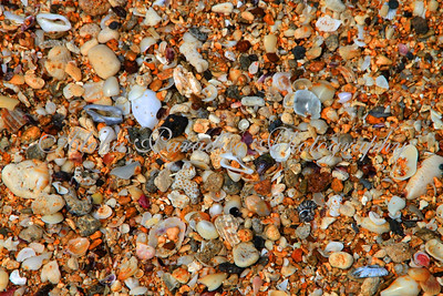 SECRET BEACH SHELLS