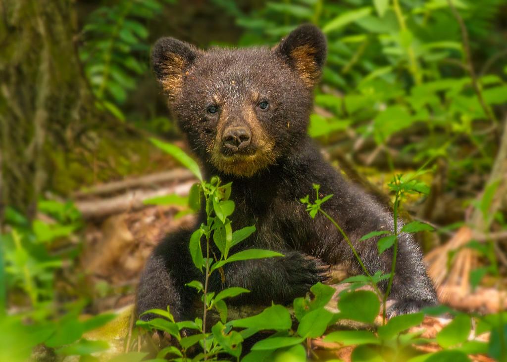 Hazel's Teddy Bear 2017