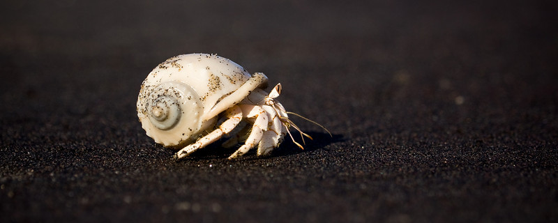 Hermit crab, from down at its level. <br /> <br /> Location: Berbera, Somalia (Somaliland)<br /> <br /> Lens used: Canon 100-400mm f4.5-5.6 IS