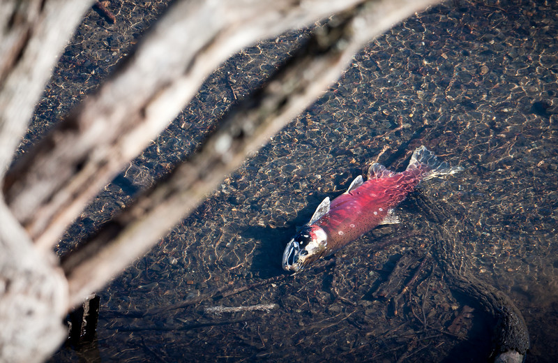 The end of life.<br /> <br /> Location: Lyle, Washington<br /> <br /> Lens used: Canon 100-400mm f4.5-5.6 IS