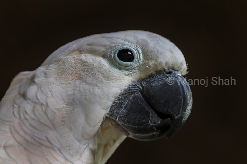 White parrot portrait