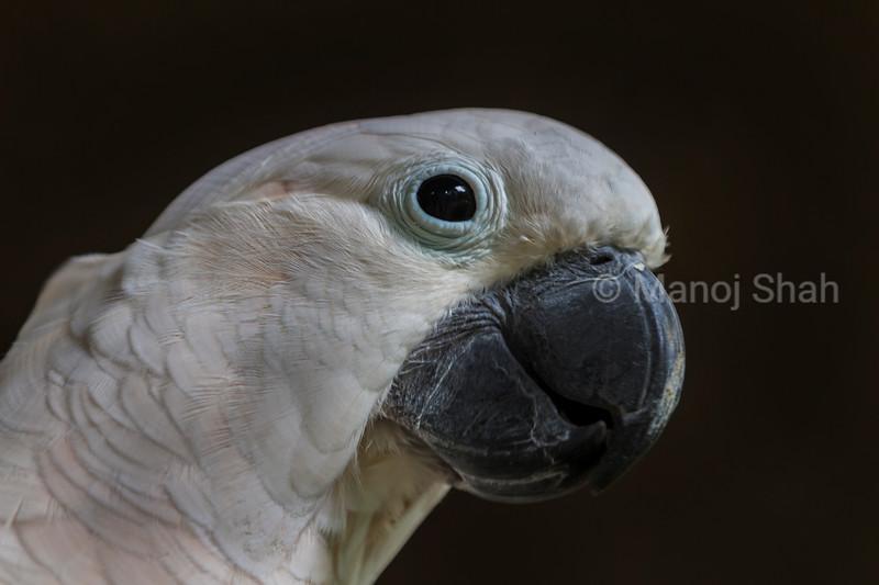 White parrot portrait