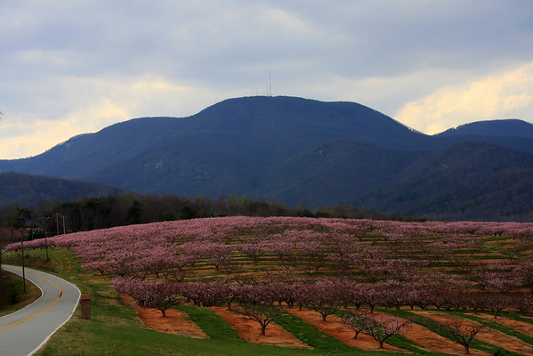 HOGBACK MOUNTAIN IN S.C.